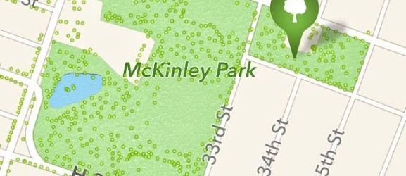 McKinley Park Tree Tour