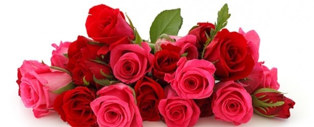 Sacramento Rose Society Show
